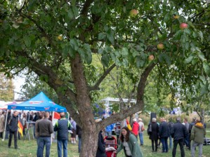 Unter Apfelbäumen: Wahlkampfveranstaltung der rechtspopulistischen AfD in Mödlareuth zum Tag der Deutschen Einheit. (Under apple trees: election campaign event of the right-wing populist AfD in Mödlauwörth for the Day of German Unity.)